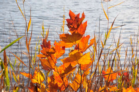 waterside: Waterside of late autumn