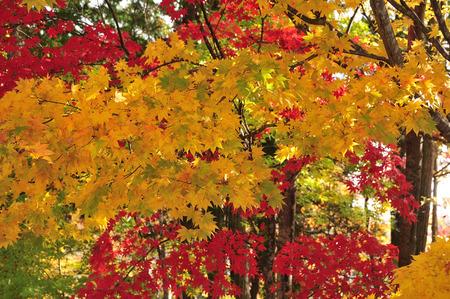 autumn color: Autumn leaves
