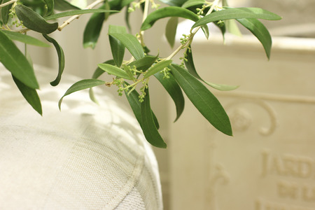 conservatory: Conservatory olive leaf Stock Photo