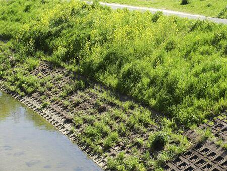 embankment: Weed river embankment