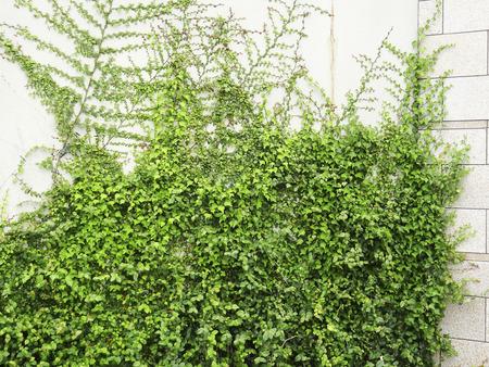 green walls: Green walls of the building