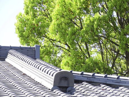 roof tiles: Fresh green and roof tiles