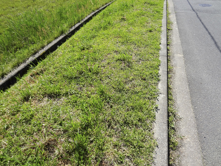 carriageway: The moldy sidewalk weed Stock Photo
