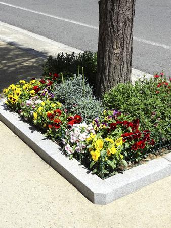 implantation: Implantation of sidewalk