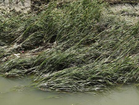 heavy rain: River contaminated with flooding of heavy rain