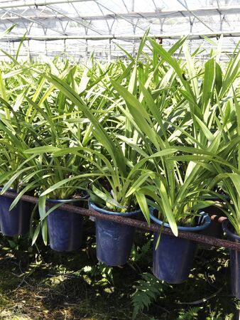 orchid house: Orchid House cultivation