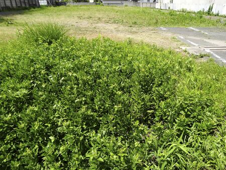 vacant land: Vacant lot of weed