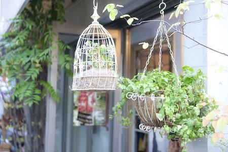 hung: Hung planter Stock Photo