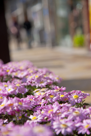 flower beds: Flower Road of flower beds Stock Photo