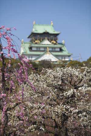 osaka castle: Castle and Osaka Castle plum Editorial