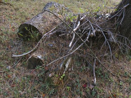 martha: Martha and dead branches