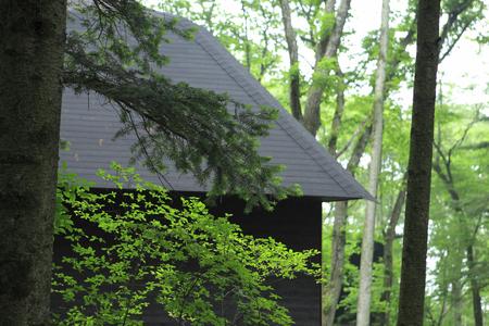 celeb: Fresh green forest
