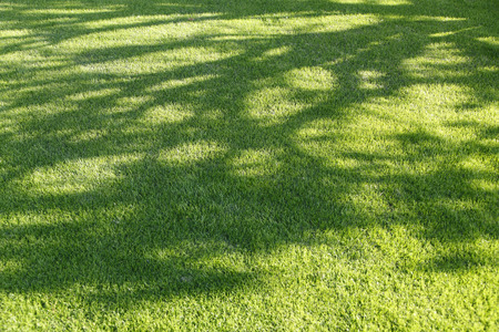 to shade: Shade of the lawn