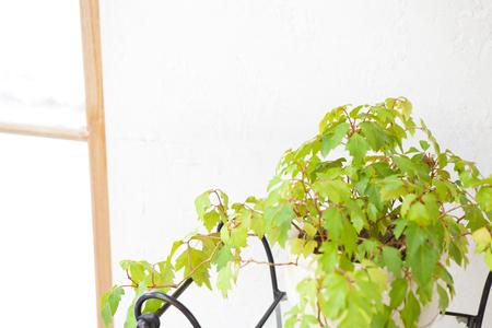 daily room: Foliage plants