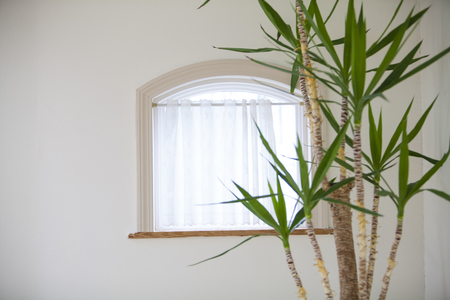 a detached living room: Bay windows and decorative plant Stock Photo