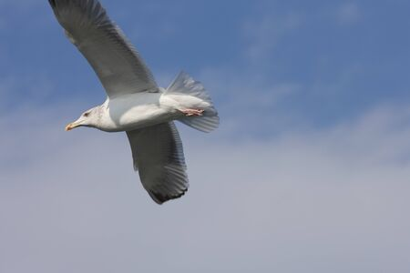 pleasent: Sea Gull Stock Photo