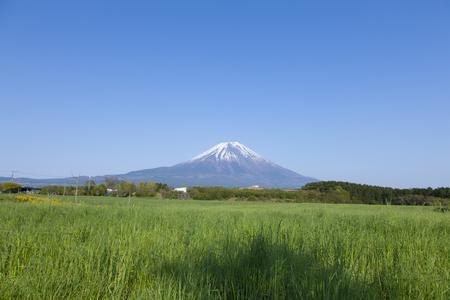 green world: Asagirikogen of grassland and Mount Fuji