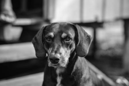 cute black dog portrait