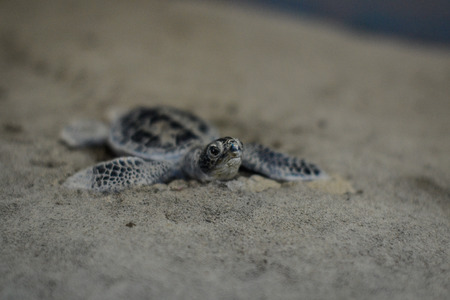 a baby turtle in the sand