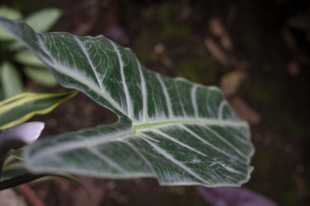large leaf close up