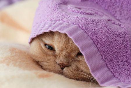 sleep: Close up cat