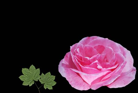Rose and leaf gift card photo