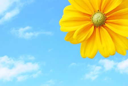 Sunflower against the blue sky with cloud