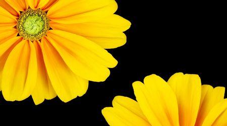 Sunflower frame on black background  photo