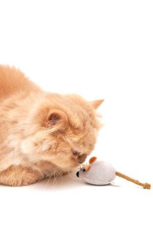Cat kisses a mouse