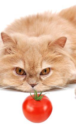 Cat's staring at tomato Stock Photo - 6182016