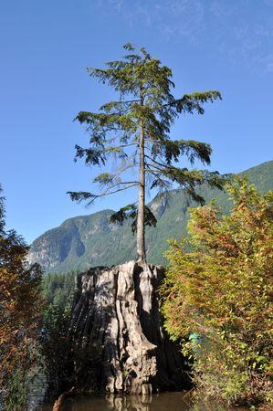 Beautiful landscape view Stock Photo - 7653415