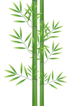 lucky bamboo: Abstract nature bamboo
