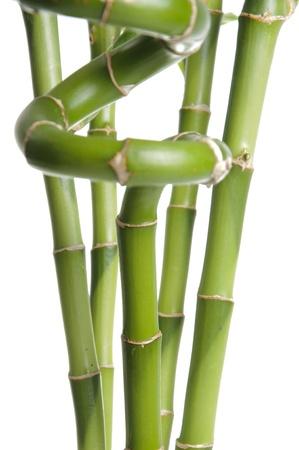 Nature bamboo on white background  photo