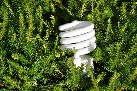 Save energy bulb with pine tree background  photo