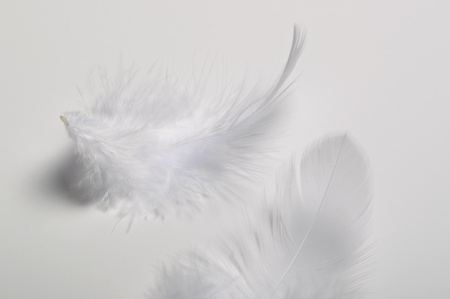 White feathers photo