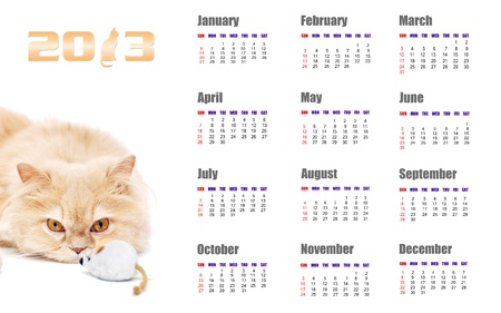 2013 calendar for cat design photo