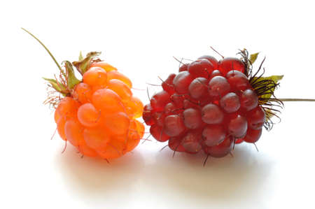 rasp: Ripe red and orange wild raspberries on white Stock Photo