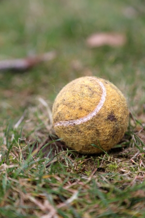 Old baseball palying by dog in the park Stock Photo - 18084694