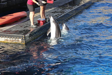 big fin: People feeding food for dolphin