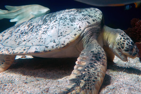 Sea turtle and shark swimming in deep ocean