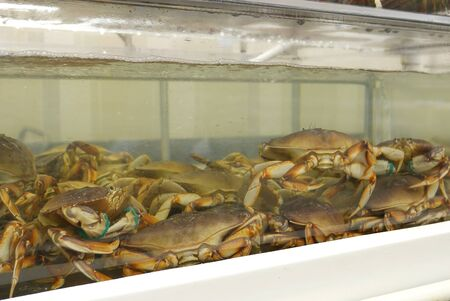Motion of live crabs in the tank at superstore Archivio Fotografico - 147604775