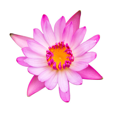 Single  water lilly flower on white background  photo