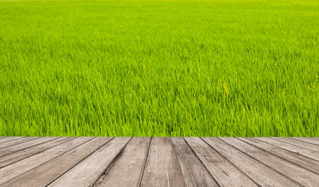 green field wall and wood floor  photo