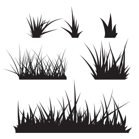 grass isolated: Grass Vector