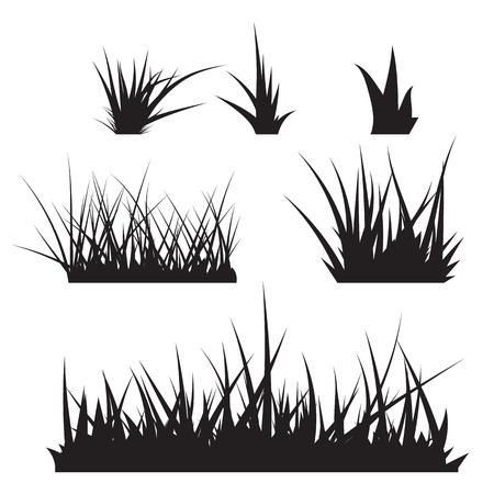 grass illustration: Grass Vector