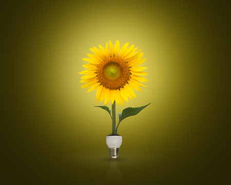 energy consumption: Bulb with beautiful sunflower,eco energy concept