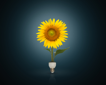 green energy: Bulb with beautiful sunflower,eco energy concept