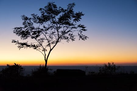 tree landscape: trees silhouette at sunset