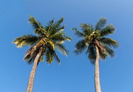 Kokospalmen am blauen Himmel Standard-Bild - 90383334