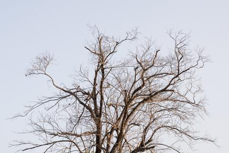 Zweig des toten Baums Standard-Bild - 90334101
